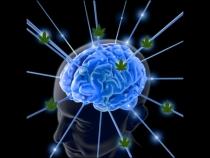 Image_light-brain_LEAF.001